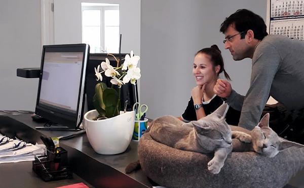 kratzbaum online shop ber stylecats. Black Bedroom Furniture Sets. Home Design Ideas