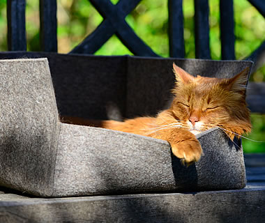 Cat Bed, cat felt bed Groovie - More product information