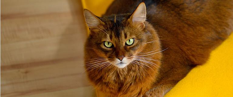 Katzenkissen ZLEEPIE - Ansehen im Kratzbaum Online Shop