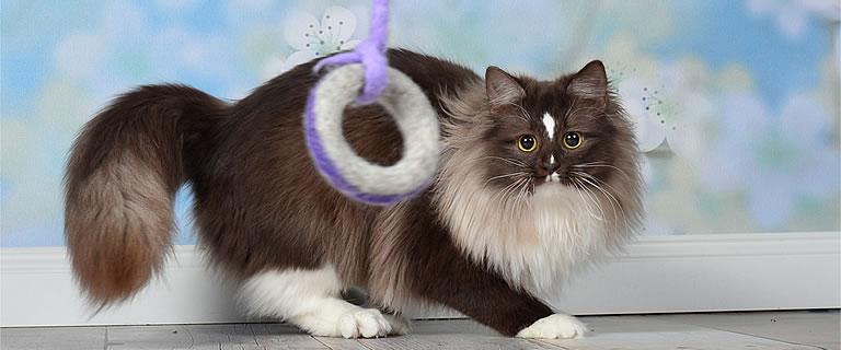 Katzenspielzeug CATCH ME - Ansehen im Kratzbaum Online Shop