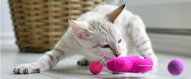 Katzenspielzeug FANG DEN FISCH - Ansehen im Kratzbaum Online Shop