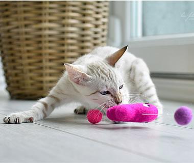 gefilztes Katzenspielzeug Fang den Fisch - Weitere Produkt-Informationen