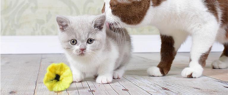 Katzenspielzeug FLOWER POWER - Ansehen im Kratzbaum Online Shop