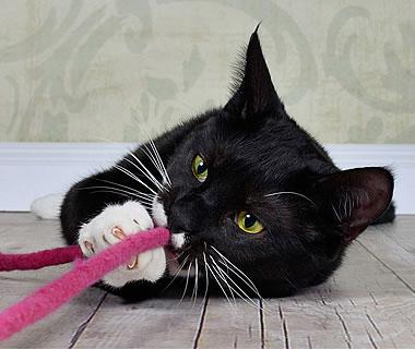 gefilztes Katzenspielzeug Filzschnur Snaky - Weitere Produkt-Informationen