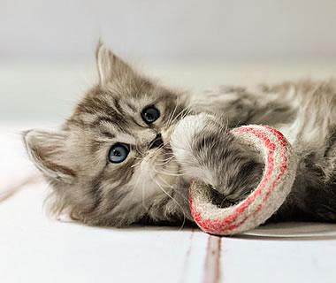 gefilztes Katzenspielzeug Filzringe - Weitere Produkt-Informationen