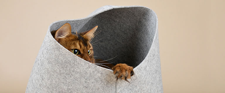 Cat Cave HOODIE - View in the cat tree online shop