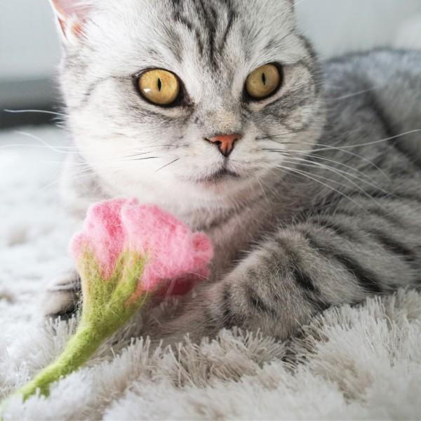 Katzenspielzeug PETUNIA